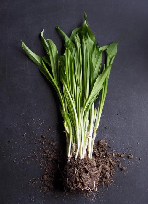alimentos orgánicos 3