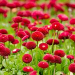 envio de flores